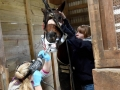 Housecall for horse dental care