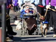 Dogs and humans compete in Furry 5K